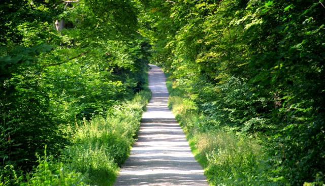 Einfahrt in den Tharandter Wald