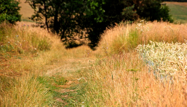 Trail bei Rottweil