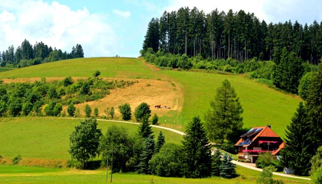 Johannes neue Lieblingsregion: Der Schwarzwald
